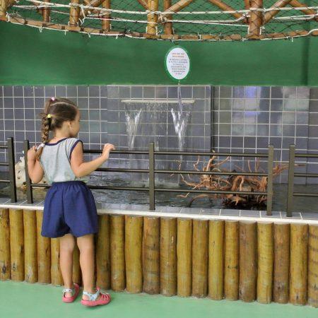 Educação Infantil – Tanque de peixes